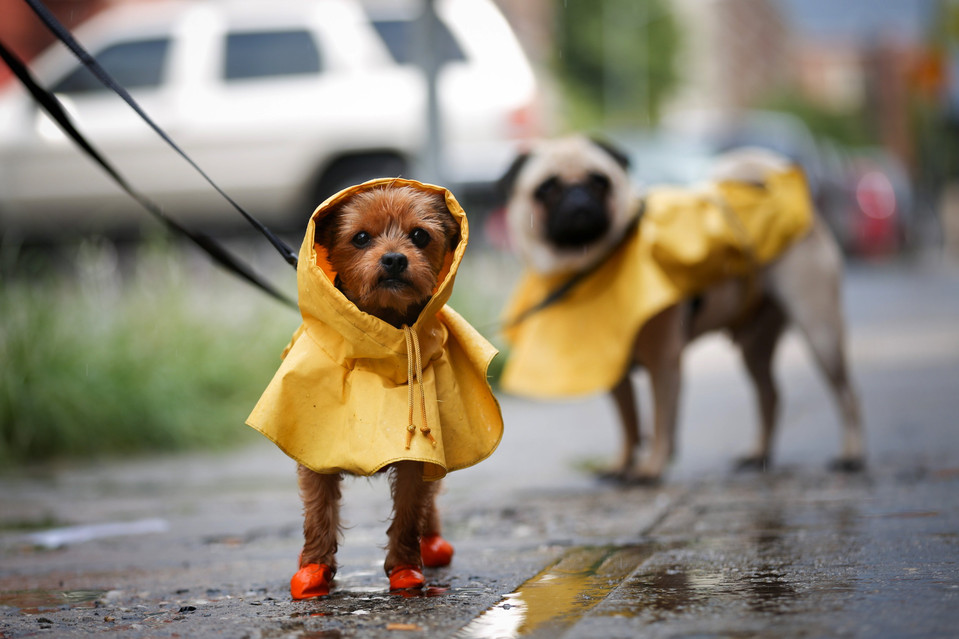 safety of pets in a storm