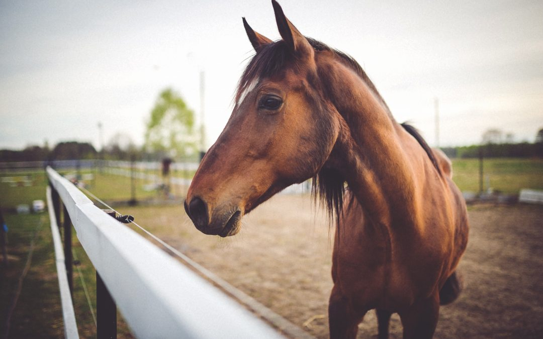 7 Things to Keep in Mind When Feeding Your Horse
