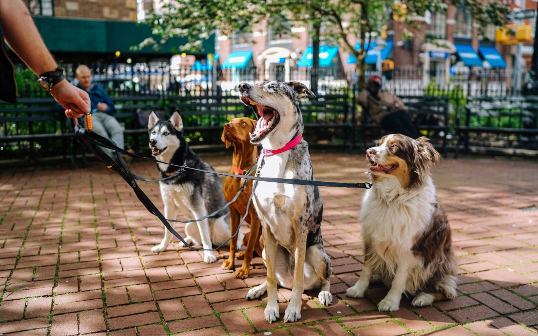 Common Dog Health Issues to Watch Out For